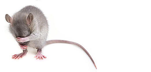 Mobile devices used for pest control