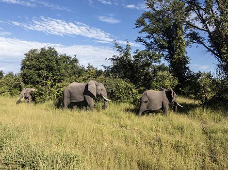 06_World-by-FotoIN_South-Luangwa-National-Park,-Zambia_HCH_2014-03-08_1394257999000