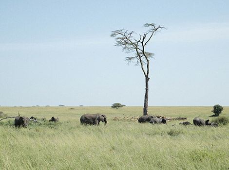 30_World-by-FotoIN_Serengeti-National-Park,-Tanzania_HCH_2014-03-22_1395477042000