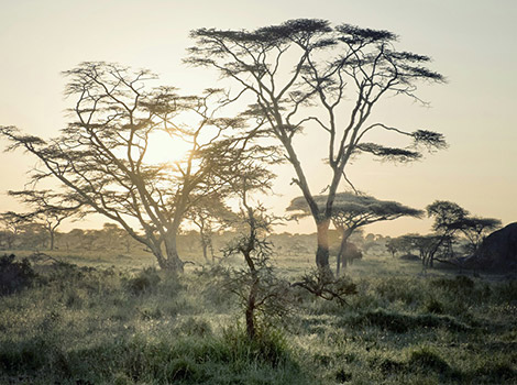 27_World-by-FotoIN_Serengeti-National-Park,-Tanzania_HCH_2014-03-22_1395464604000