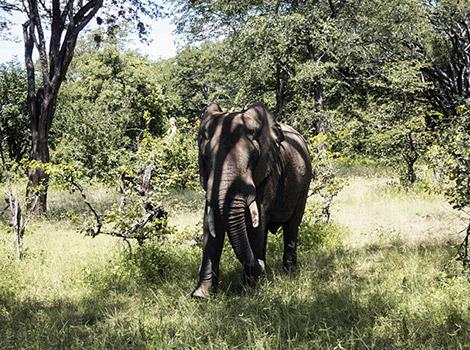 09_World-by-FotoIN_South-Luangwa-National-Park,-Zambia_HCH_2014-03-08_1394267046000